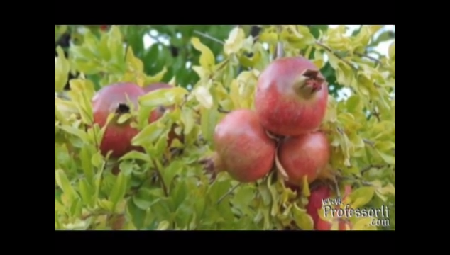 Nutritious Diet Tips On Video 3 – Pomegranate