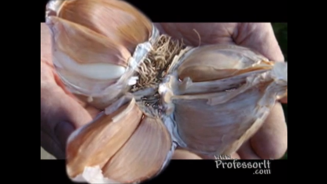 Nutritious Diet Tips On Video 9 – Super Garlic